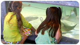 Photo of Kids Looking at Fish